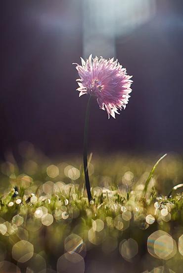 Light shinning on a purple flower